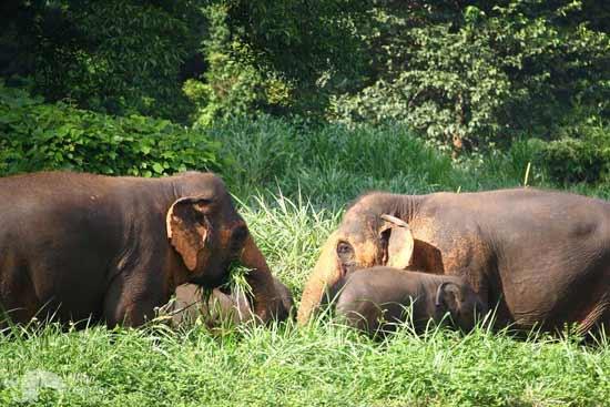 Elephant Twlight