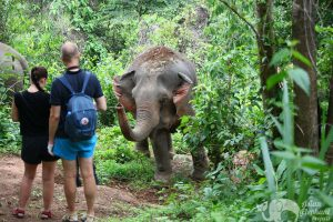 Elephant Wellness ethical elephant tour