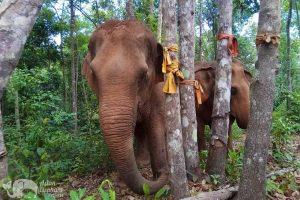ethical elephant sanctuary chiang maiKaren Elephant Experience