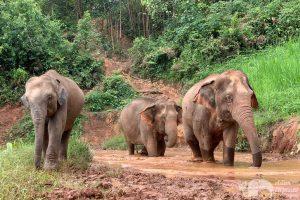 Karen Elephant Experience Herd