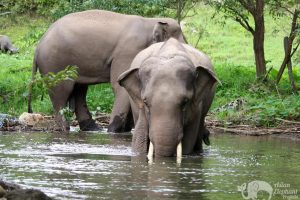 Karen Elephant Home elephant brotherss