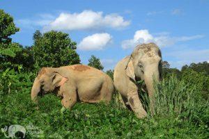 karen elephant retreat elephant tour