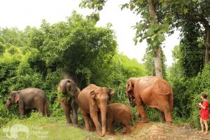 karen elephant retreat