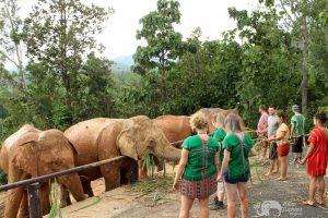 elephant feeding karen elephant retreat
