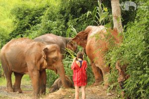 photographing elephants thailand