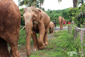 walk with elephants thailand