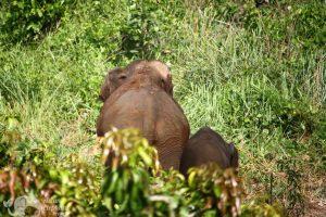 chiang mai elephant tour