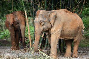 karen elephant retreat