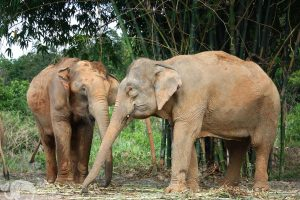 see elephants thai vacation