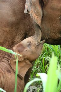 Baby Elephant Karen Elephant Serenity