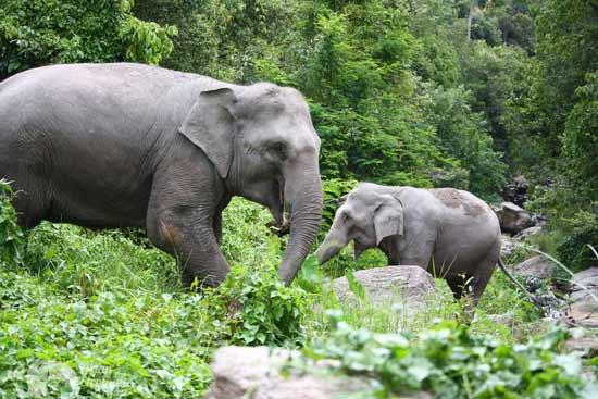 Karen Elephant Oasis