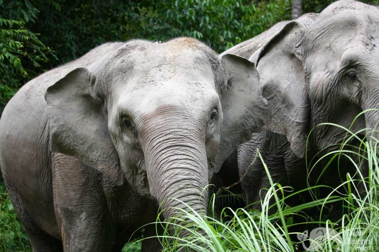 Karen_Elephant_Oasis_39