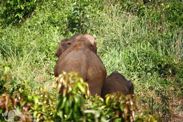 elephant tour chiang mai