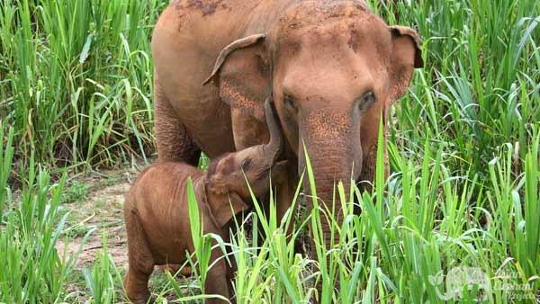 Karen_Elephant_Serenity_Herd