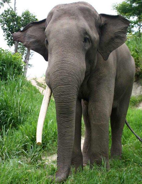 Kham_Meun Karen Elephant Home