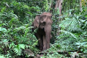 Elephant Pride ethical elephant project