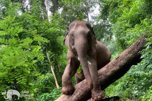 Elephant Delight ethical elephant tour