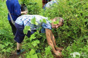 Elephant Green Hill planting trees
