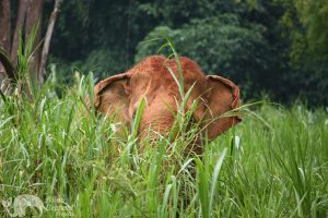 Elephant Green Hill ethical elephant project