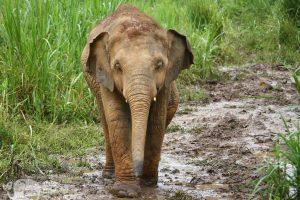 Elephant Green Hill ethical elephant tour