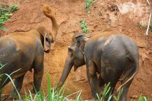 Elephant Green Hill elephants throwing sand