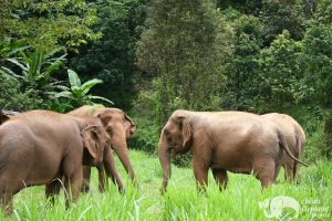 elephant highlands sanctuary
