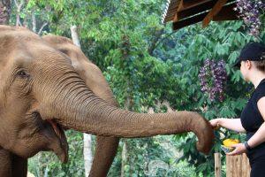 feeding elephants at elephant sanctuary
