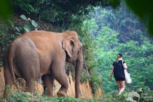 walking with elephants thailand