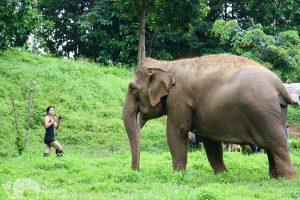 photographing elephant
