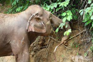 observing elephant at elephant highlands