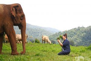 sam tull visiting elephant highlands chiang mai thailand