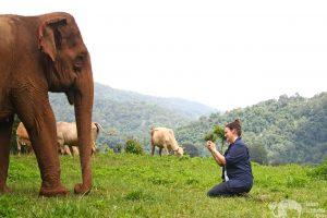 sam tull visiting elephant highlands chiang mai thailand