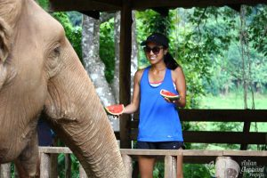 feeding elephants at elephant highlands sanctuary