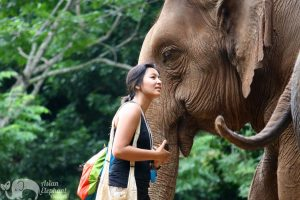 Model admires elephant at elephant highlands