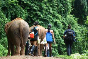 guests walking with elephants at elephant highlands sanctuary