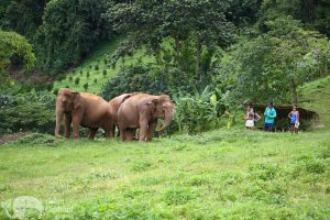 elephant highlands