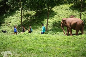 walking with elephants at chiang mai elephant sanctuary