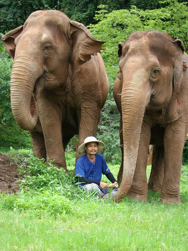 Elephant_Highlands_Project