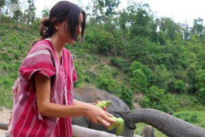 Feeding elephants at ethical elephant tour