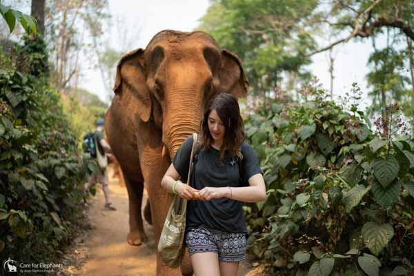 Walk_with_Elephants_1