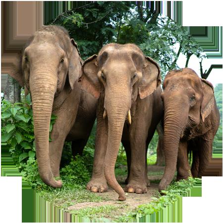 respect for elephants world elephant day 2019