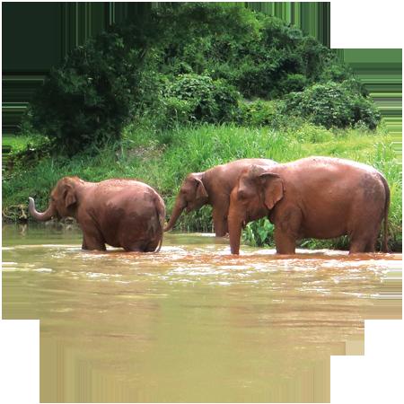 elephants bathing world elephant day
