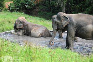 Asian Elephant Projects ethical elephant tour Karen Elephant Habitat