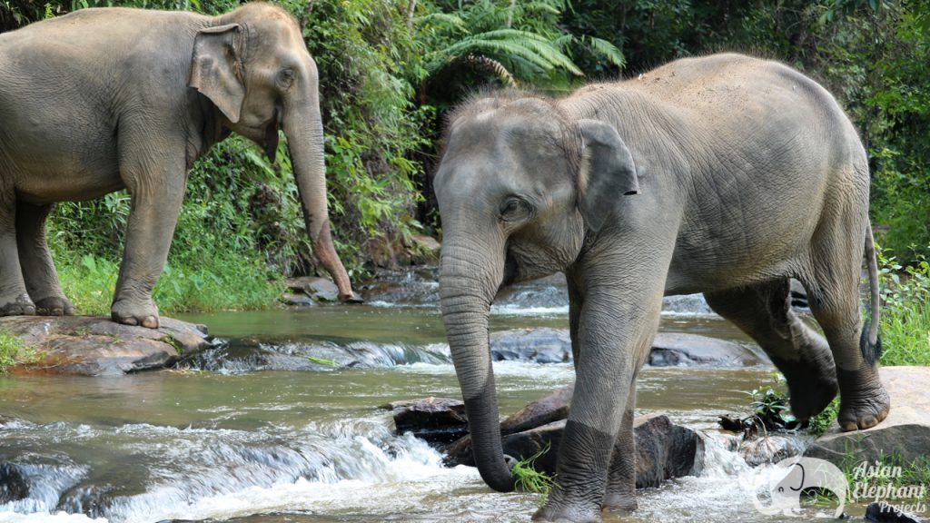 Asian Elephant Projects Ethical Elephant Tours
