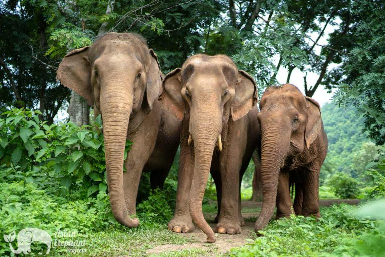 Care_For_Elephants