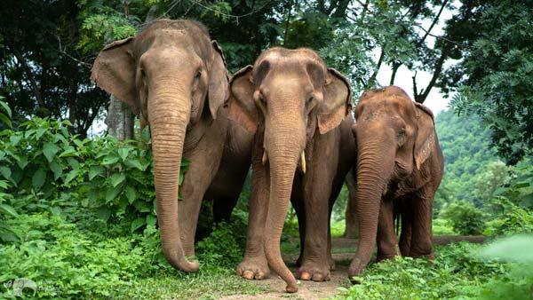 Care_for_Elephants_03