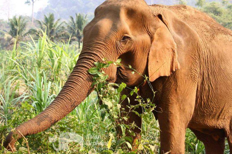 Elephant Delight