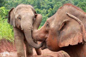 Elephant Green Hill elephant friends