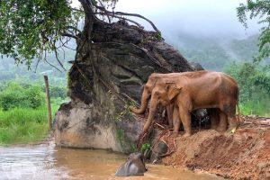 Elephant Green Hill elephant bath