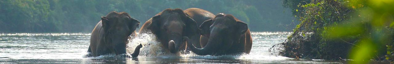 Elephant_Haven_Kanchanburi